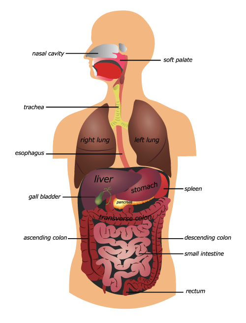 Digestive Health Faqs Digestive Abdominal Pain Hunterdon