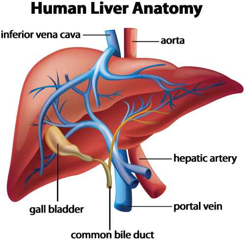 Liver disease hepatitis faqs hunterdon gastroenterology what are the signs of liver disease ccuart Image collections